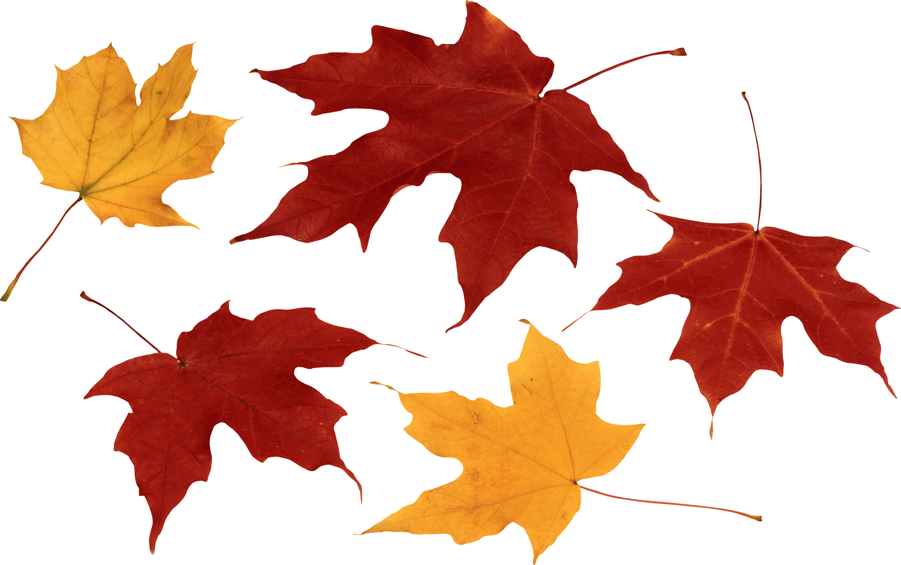 Falling leaves png transparent. Autumn images free download