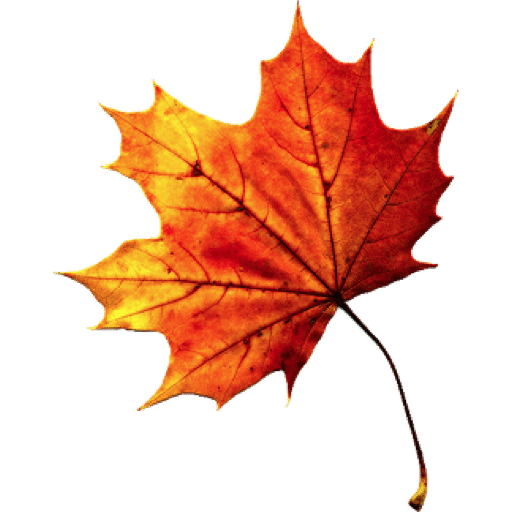 Png fall leaves. Autumn images transparent free