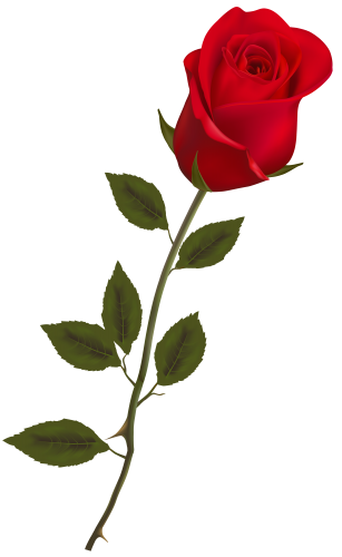 Stem drawing rose bud. Beautiful red png clipart