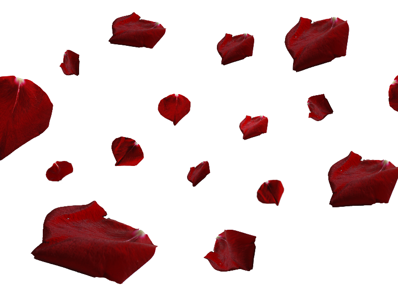Flower petal png. Red rose petals isolated