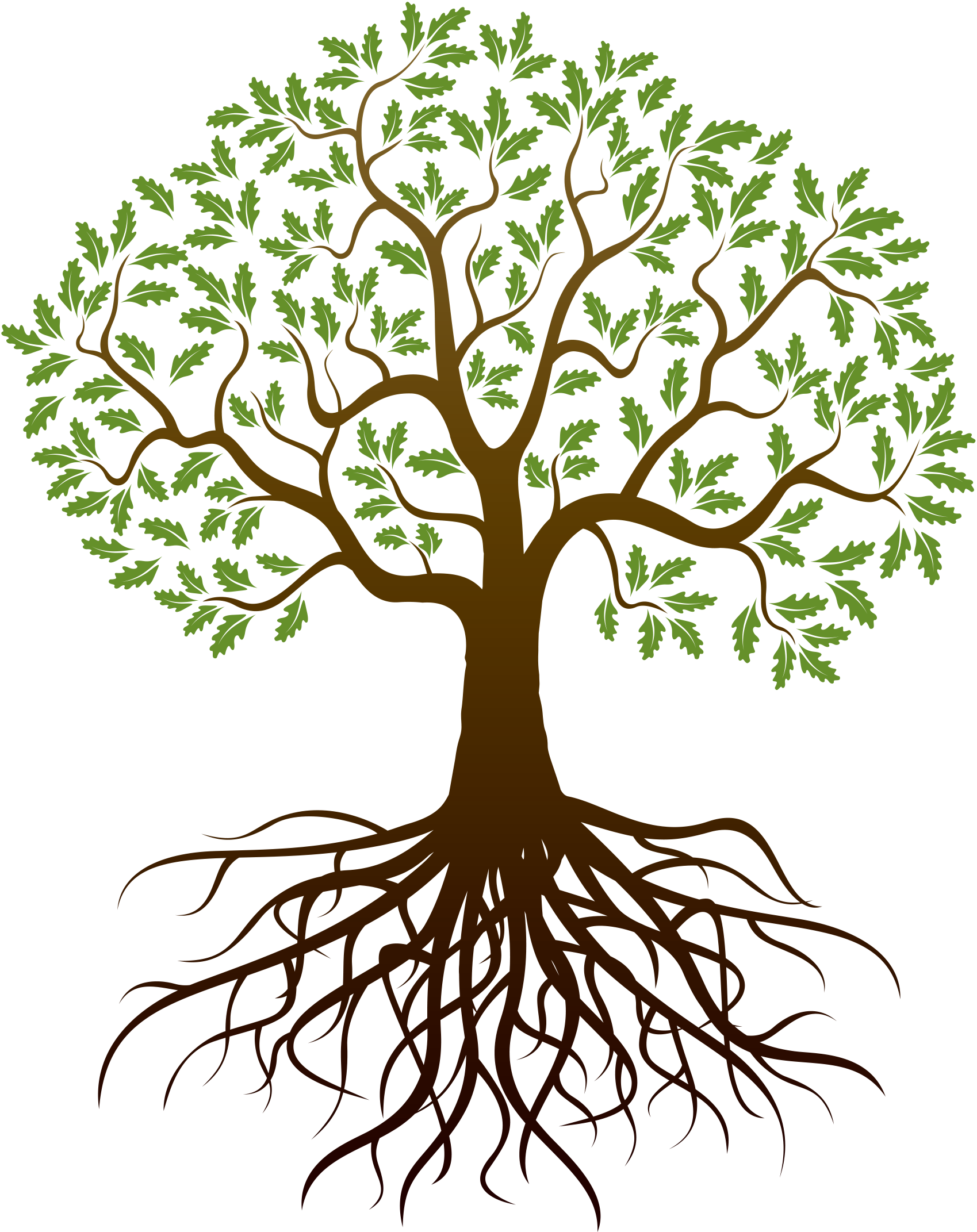 Family tree png. Drawing root reunion transprent