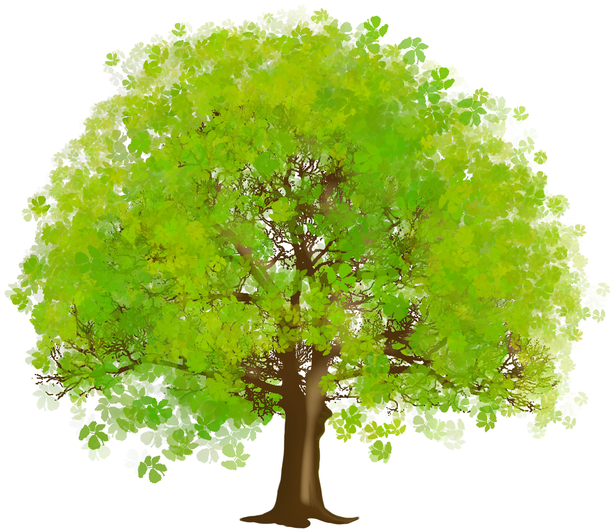 Family tree png. Large green clipart illustrations