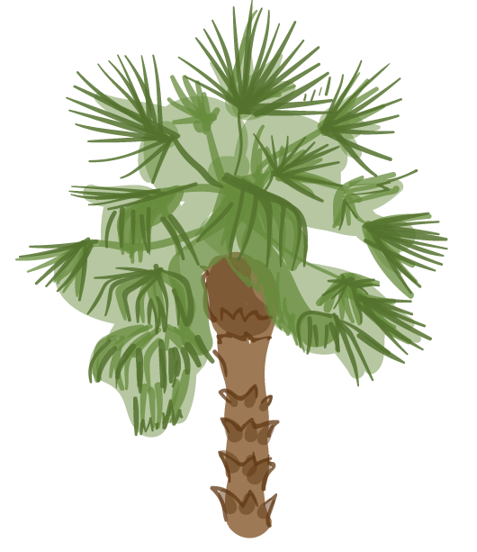 Fan palm png. L a s trees