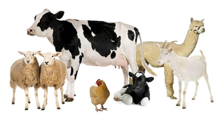 Farm animals png. Broughty ferry pet supplies