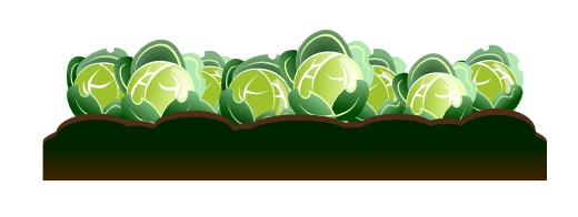 Cabbage clipart illustration. Free to use public