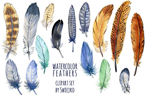 Feathers clipart. Watercolor feather illustrations creative