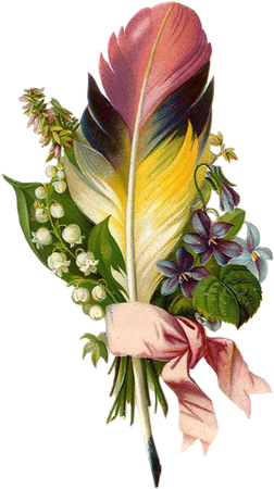 Feather clipart bunch. Caj scr rose victorienne