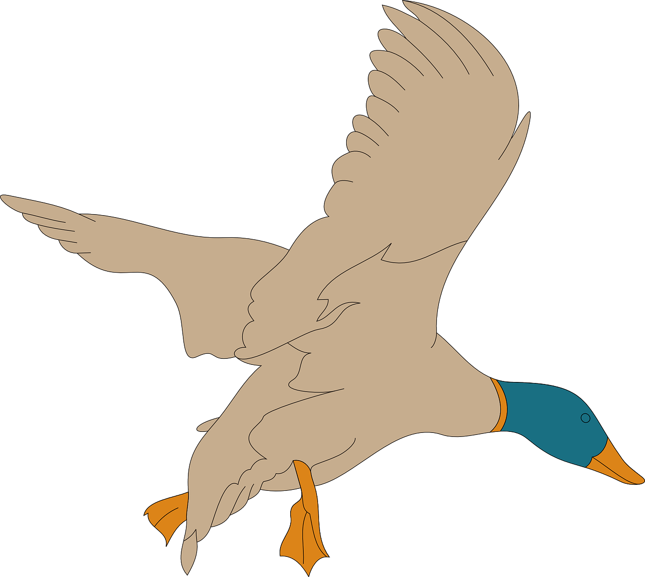 Feather clipart duck feather. Bird wings landing feathers
