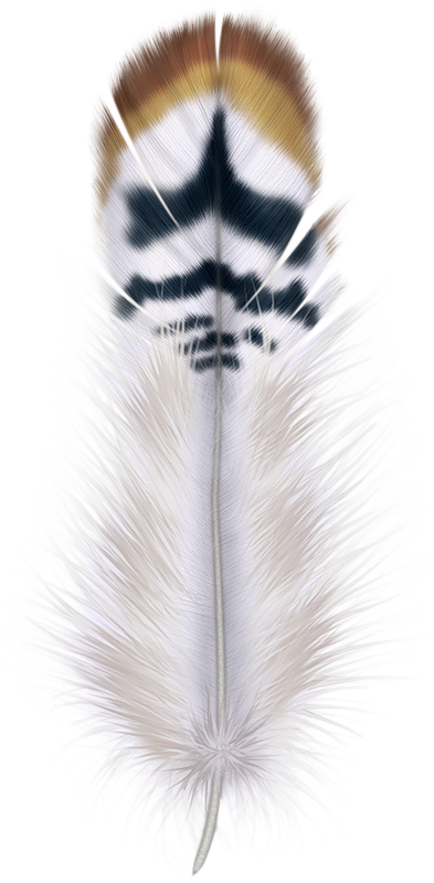 Fur vector bird feather. Png in feathers pinterest