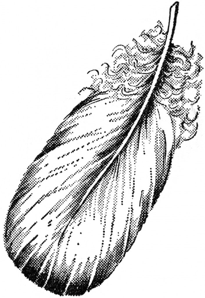 Feather clipart victorian. Best feathers images