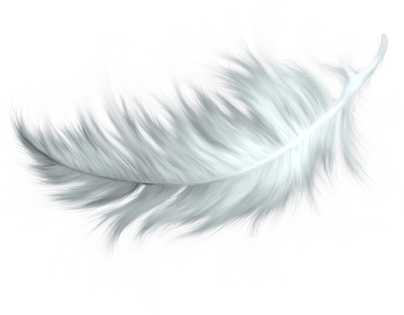 White feathers png. Feather transparent stickpng nature