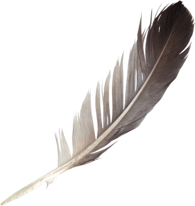 Feather png. Download free transparent image