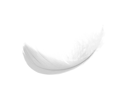White feathers png. Feather images free download