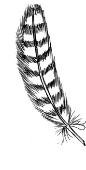 Feathers clipart ink. Pen and line art