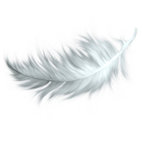 Feathers clipart png. White feather clip art