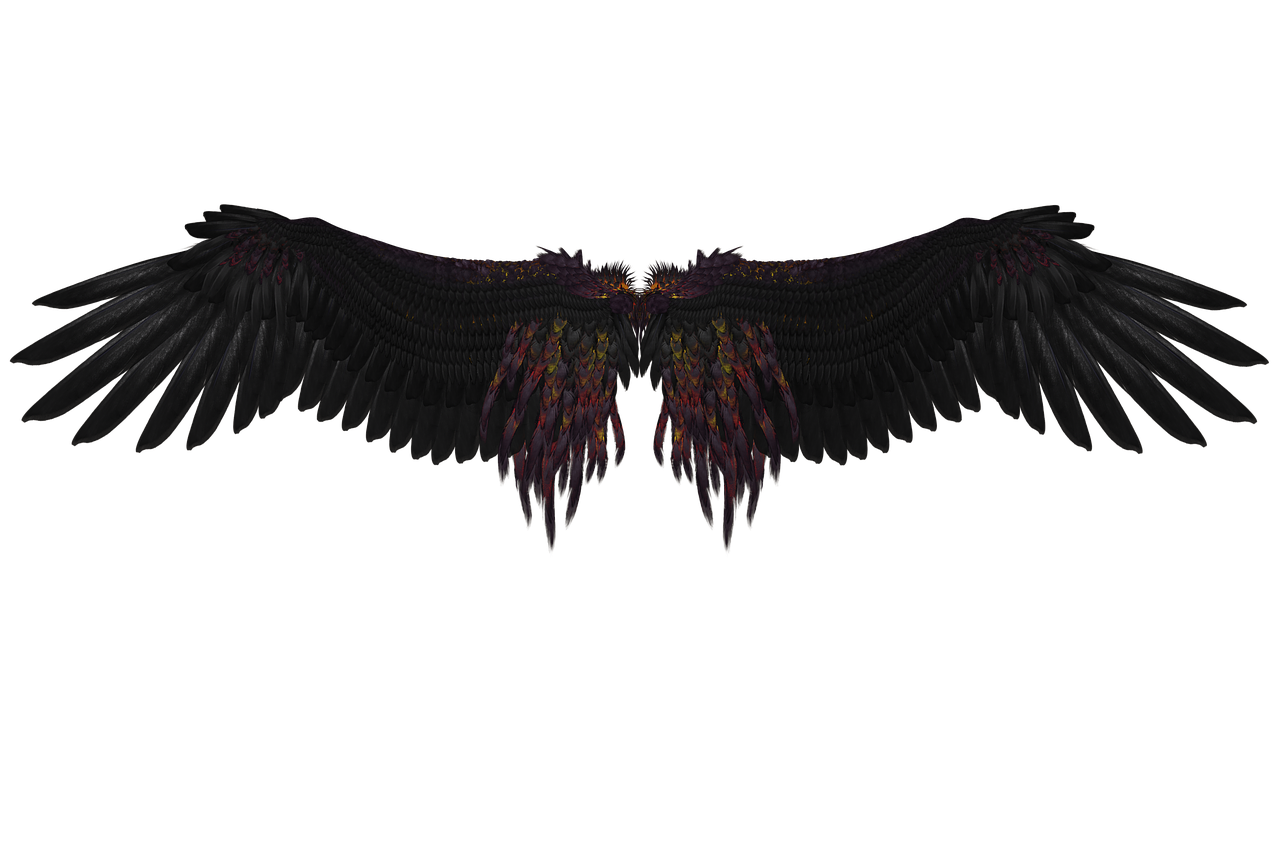 Feathers flying png. Free image on pixabay