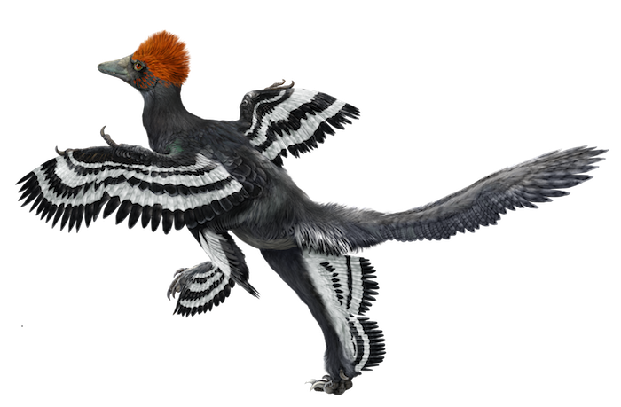 Feathers flying png. Dinosaur to bird flight