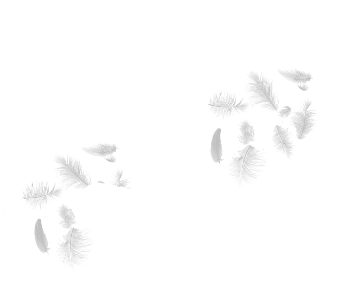 Feathers png. Allied feather idb stories