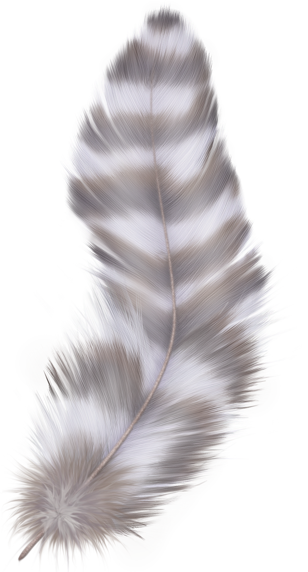 Transparent feathers silver