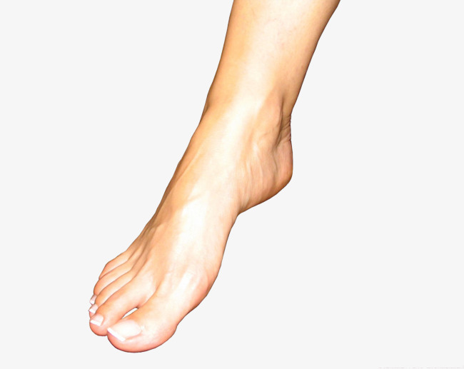 Feet clipart one foot. Picture transparent material png
