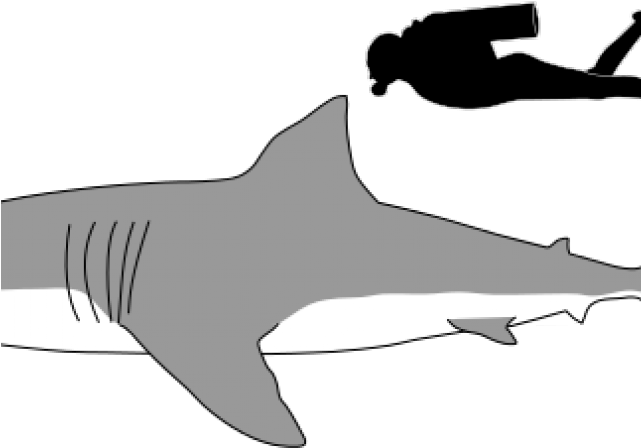 Feet clipart side view. Download hd great white