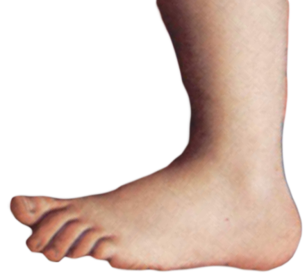 Feet png. File monty python foot