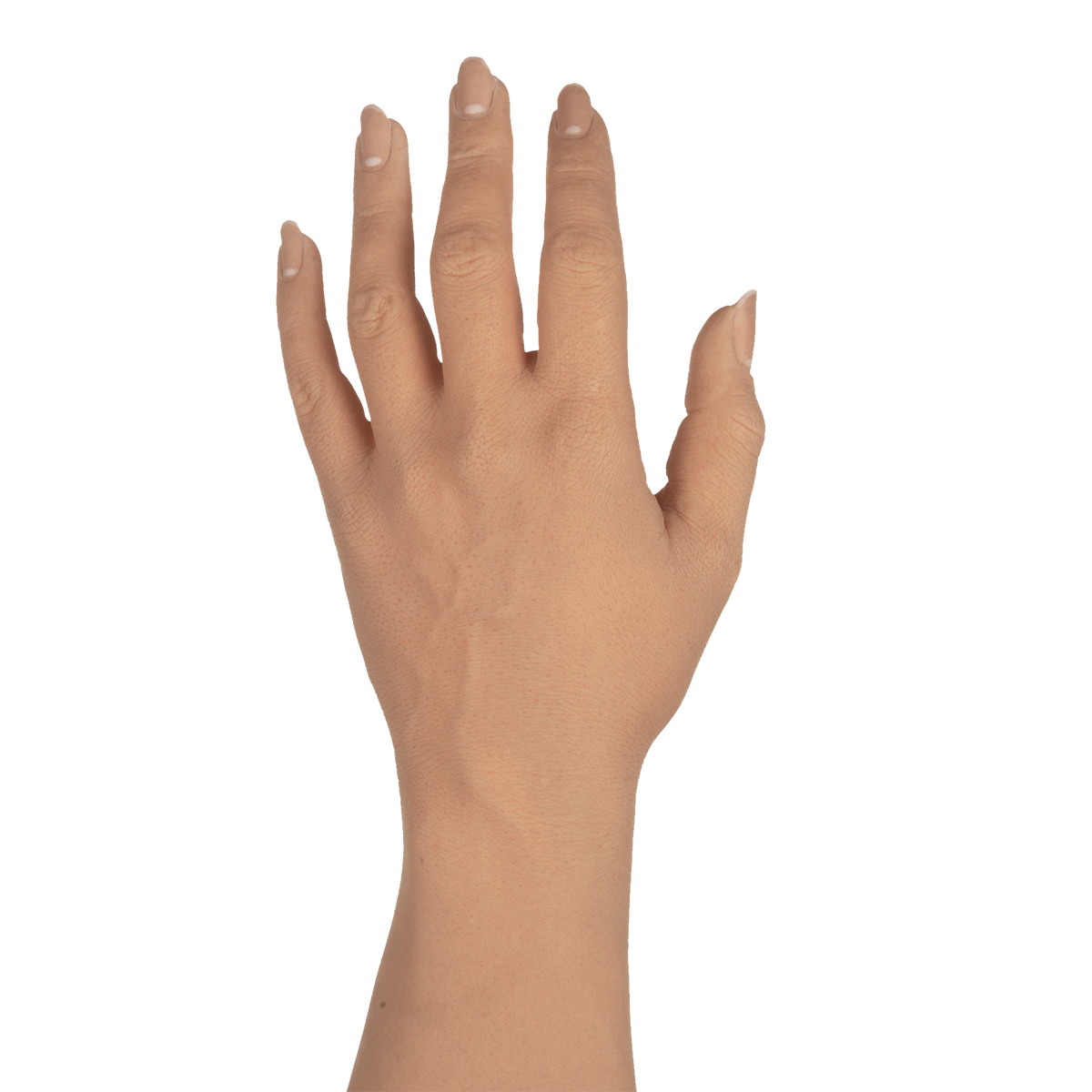 Female arm png. Cosmetic gloves adult hd