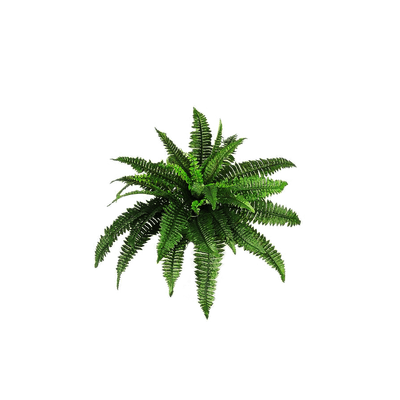 Transparent fern dark green. Bush and flowers png