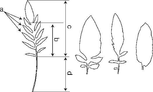 Characteristics and examples of. Fern clipart compound leaf clipart black and white stock