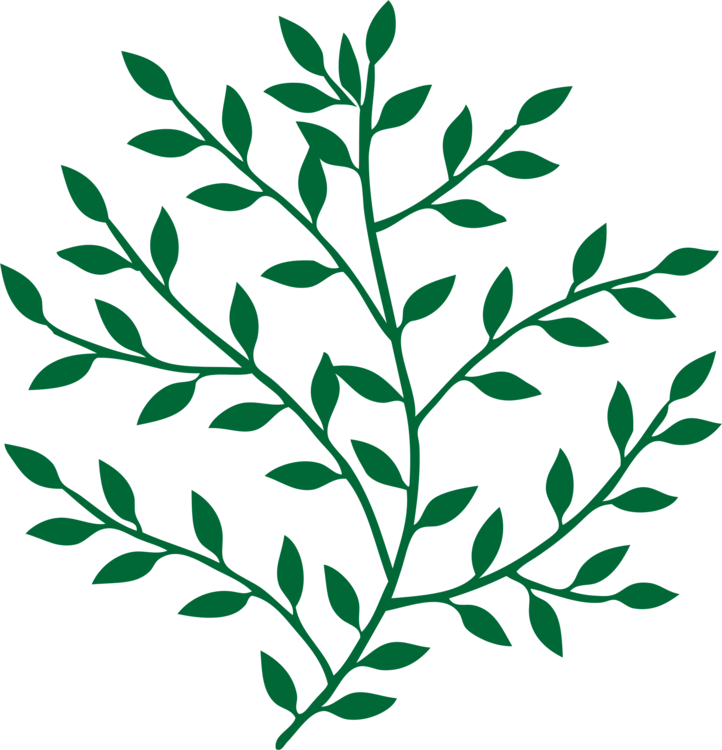 Laurel clipart leaf stem. Branch tree bay art