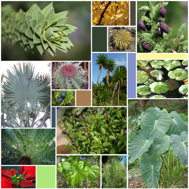 Wikiwand the diversity of. Fern clipart compound leaf image freeuse download