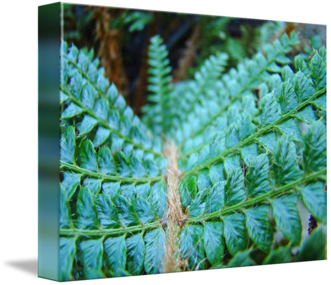 Fern clipart green fern. Forest images gallery for