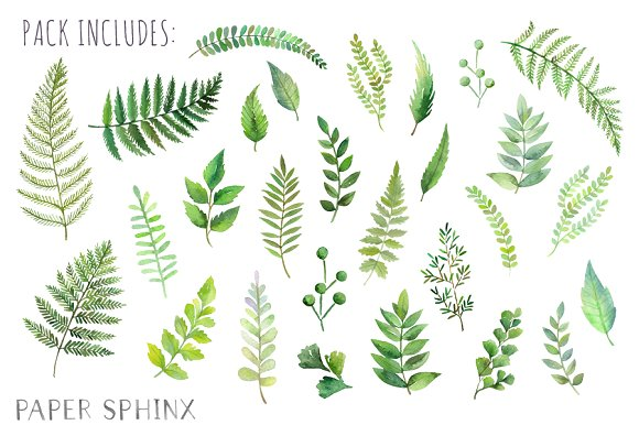 Fern clipart green fern. Watercolor leaf pack illustrations
