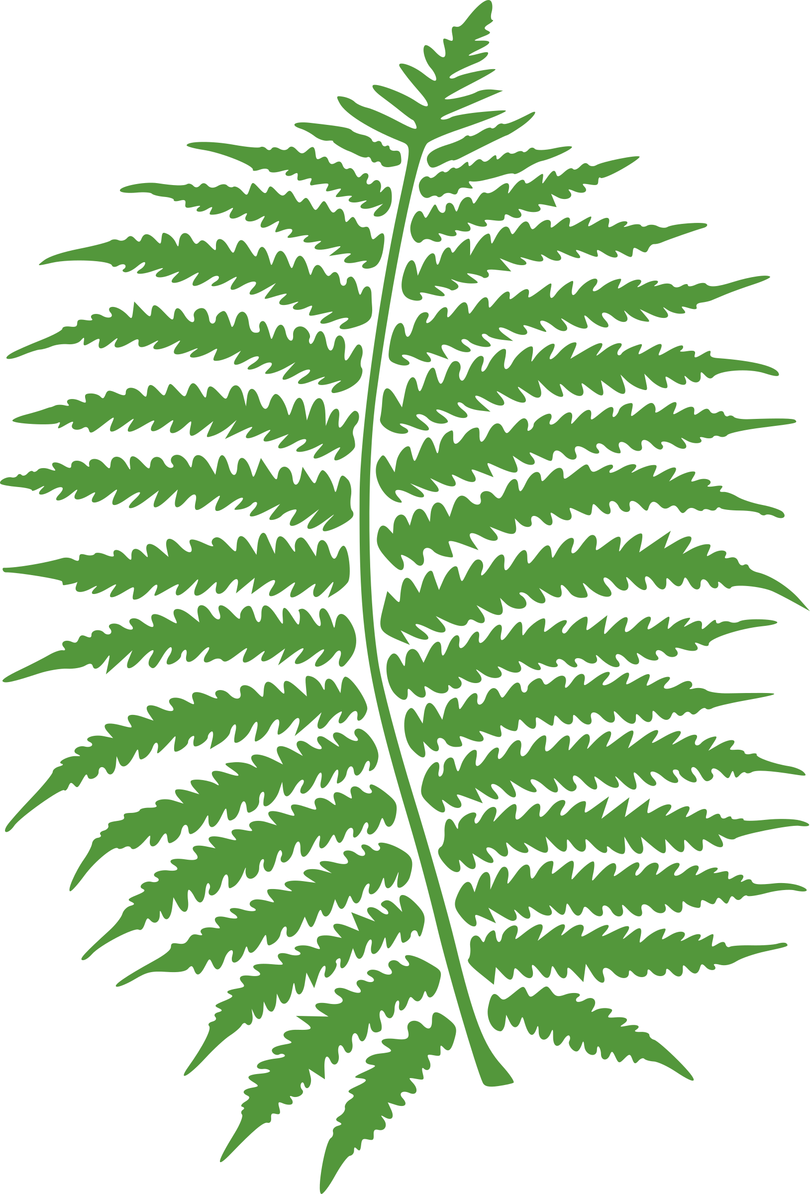 Fern clipart green fern.