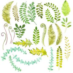 Fern clipart leaf accent. Watercolor pack pinterest and