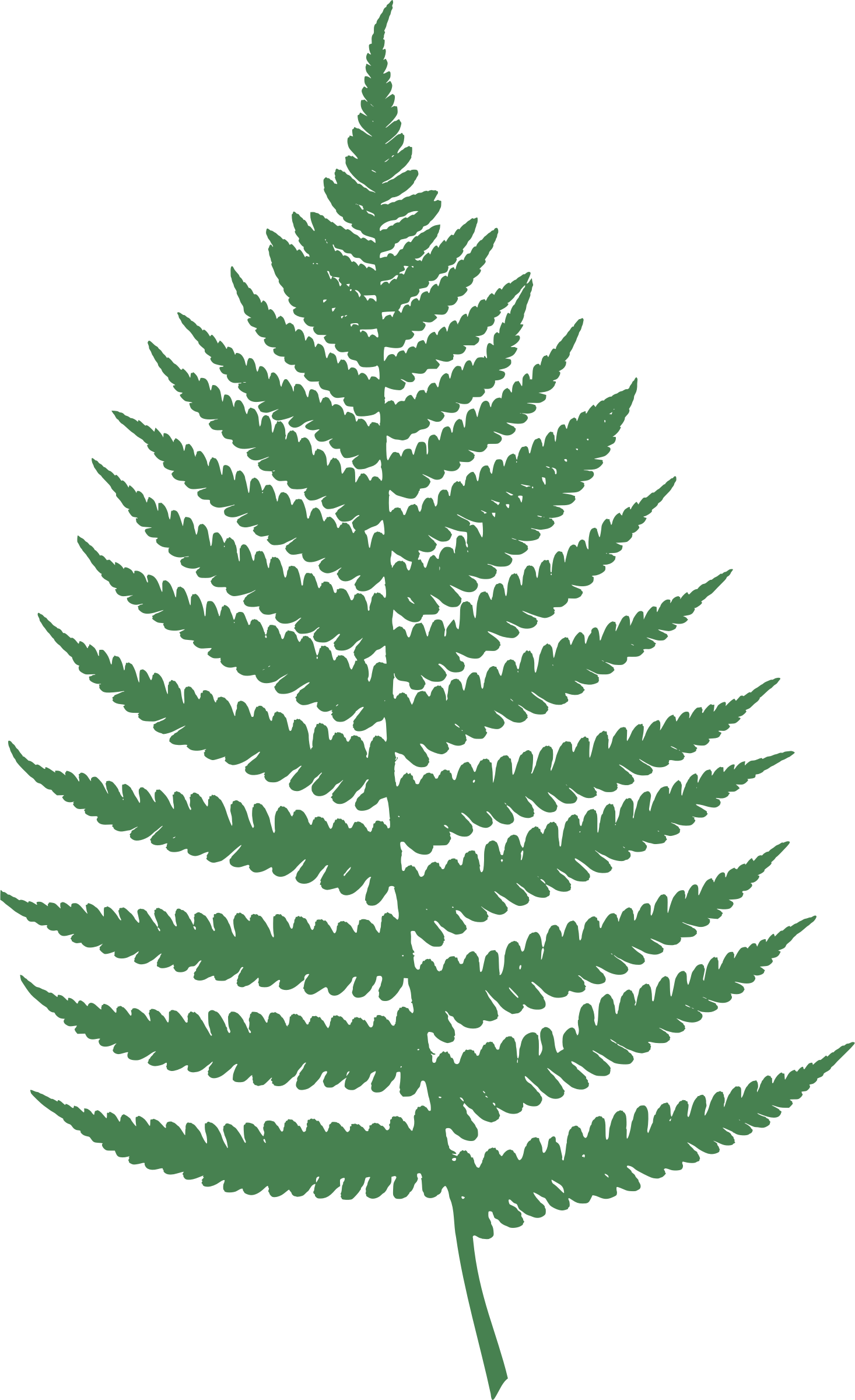 Fern clipart leaf accent. By moini wood burning