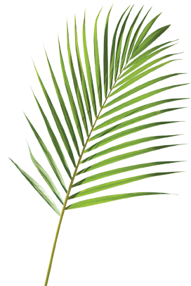 Fern clipart leaf accent. Palm sunday clip art