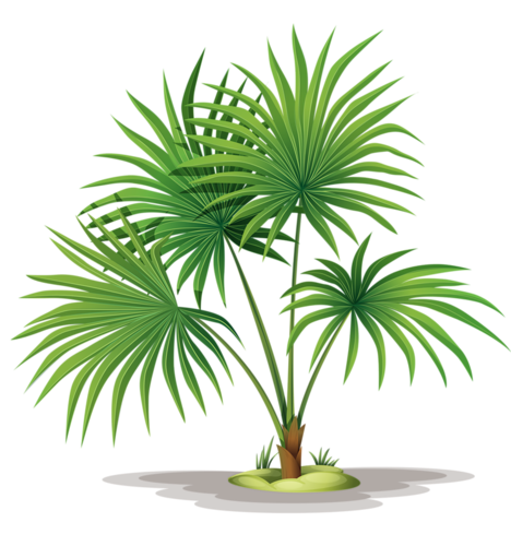 Fern clipart leaf accent. Pin by xixueer on