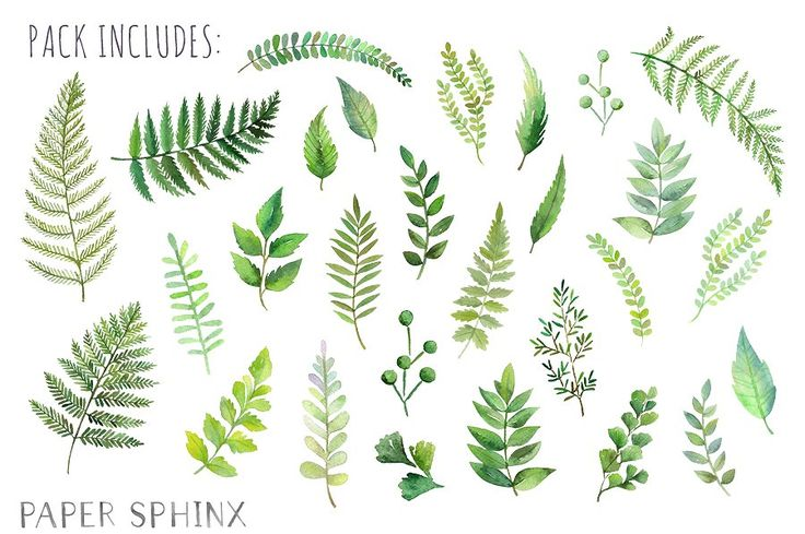 best leaves images. Fern clipart leaf accent clip art freeuse library