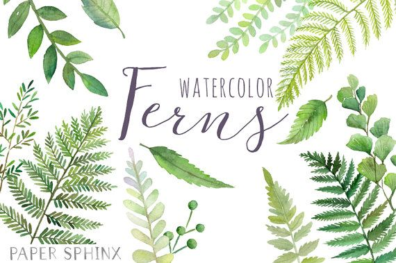 Fern clipart leaf accent. Watercolor ferns forest leaves