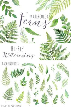 Watercolor ferns forest leaves. Fern clipart leaf accent graphic freeuse library