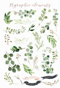 Watercolor pack pinterest and. Fern clipart leaf accent royalty free