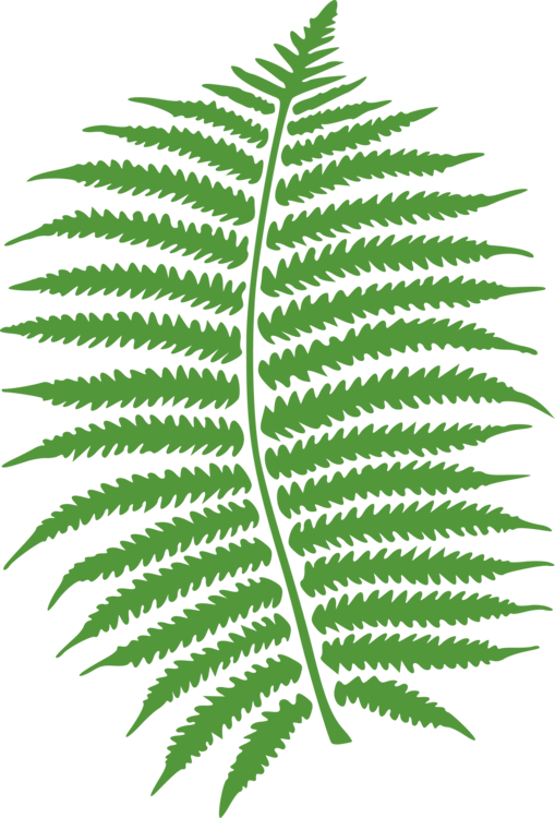 Fern clipart green fern. Computer icons frond art