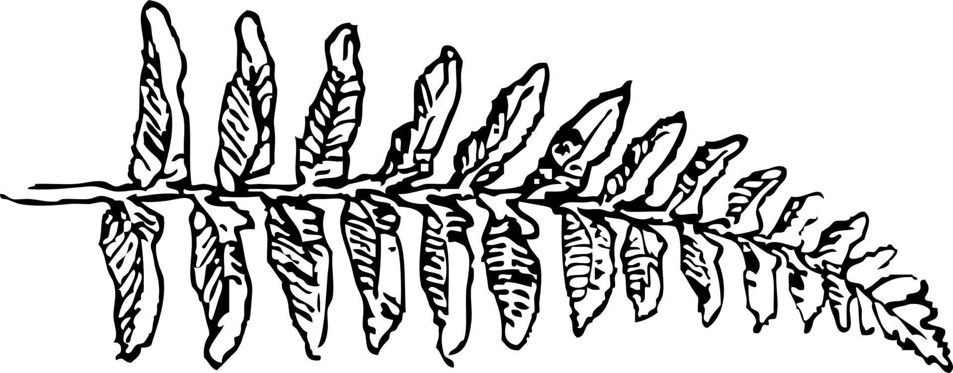 Fern clipart line art. Drawing frond leaf black