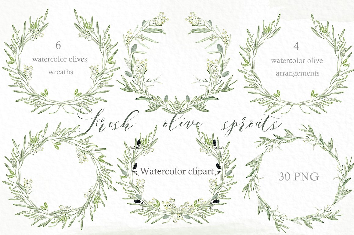 Fern clipart olive. Sprouts wreaths branch illustrations