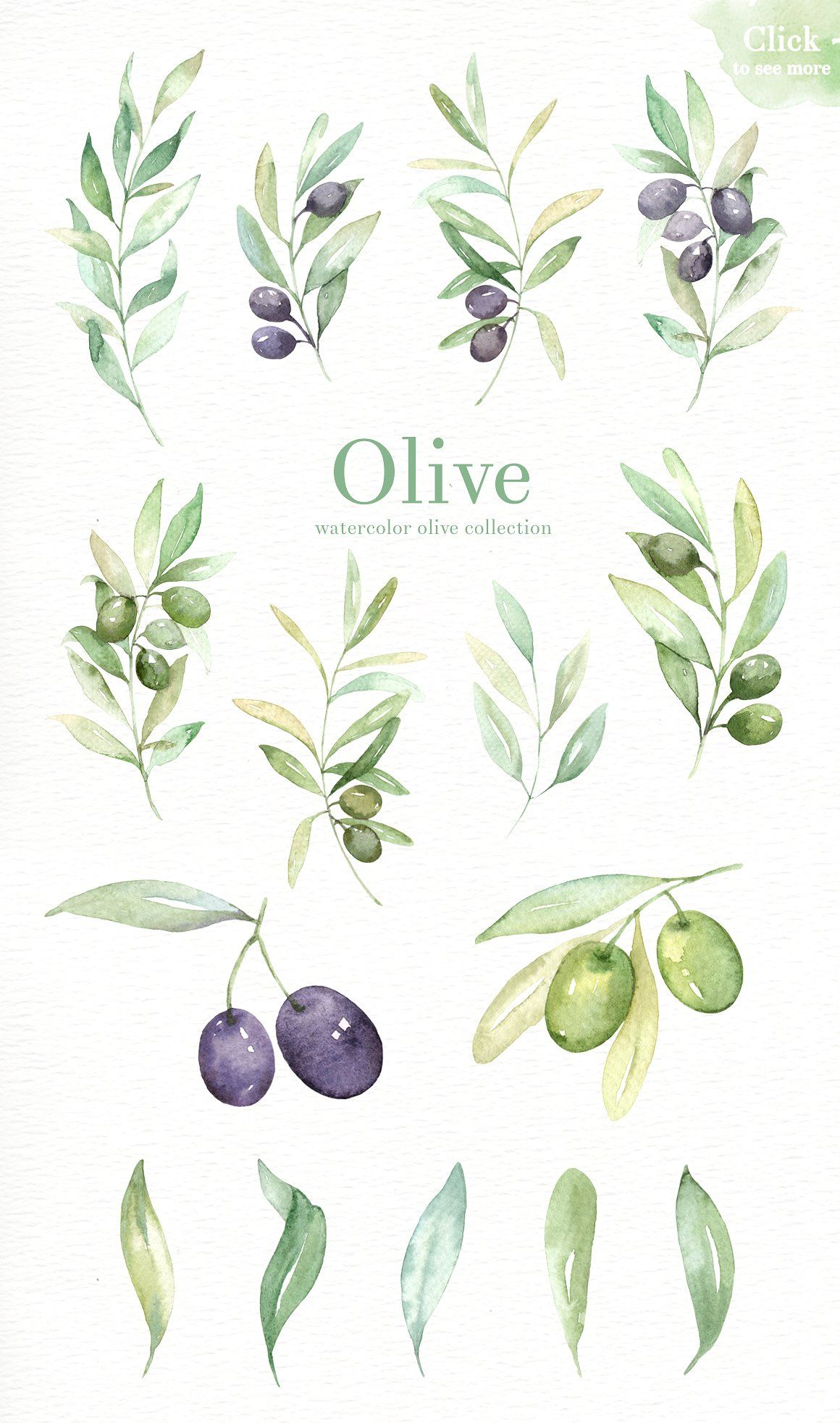 Fern clipart olive. Watercolor pinterest illustrations and