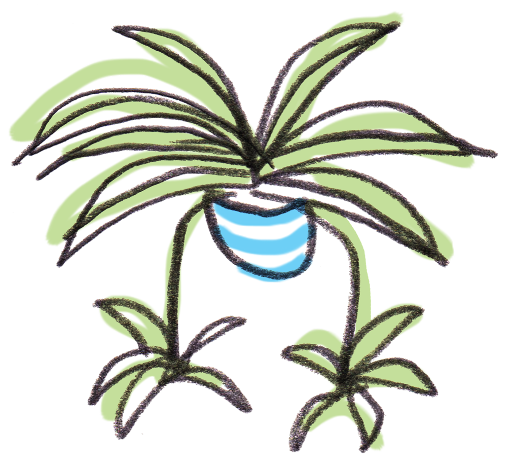 Fern clipart planter. Welcome to spiderplant houseplant