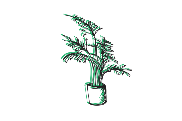 Fern clipart planter. Your guide to indoor
