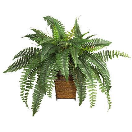 Fern clipart planter. Amazon com nearly natural
