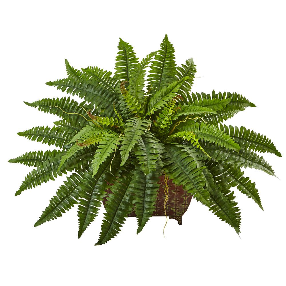 Fern clipart planter. Nearly natural in boston